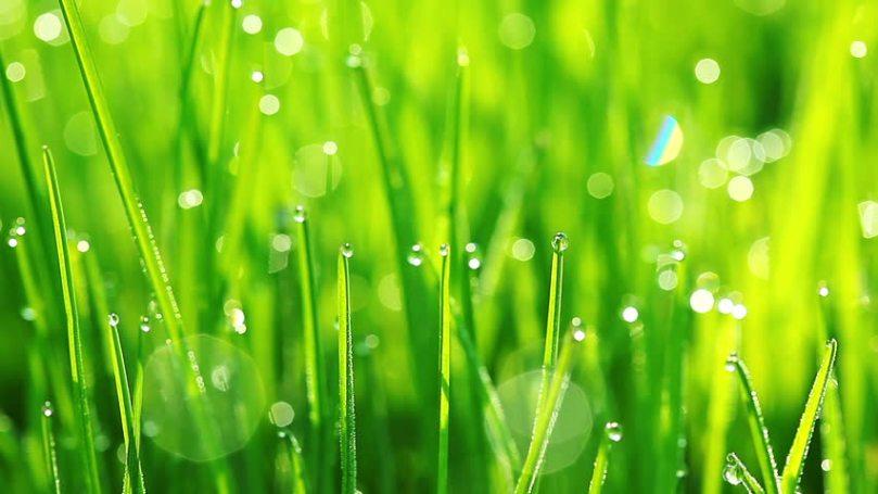 grass with dew.jpg