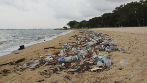 Litter_on_Singapore's_East_Coast_Park.620_0