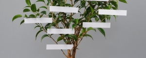 """Potted """"family-tree"""""""