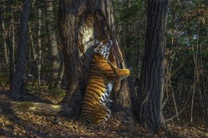 Sergey Gorshkov - Hugging Tiger